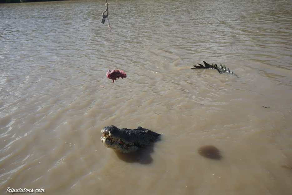 jumping-crocodiles-7