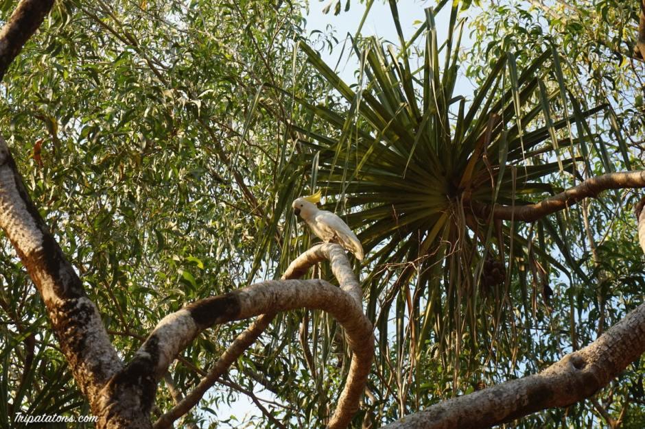 wangi-falls-parrots