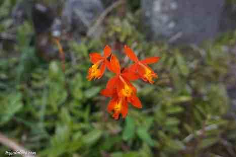 botanic-garden-bali-8