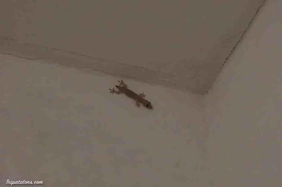 Un visiteur, nombreux ici :)