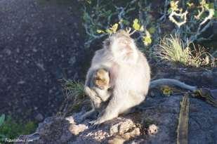 mount-batur-summit-monkey-3