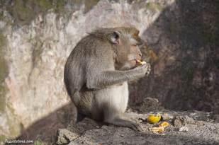 mount-batur-summit-monkey-5