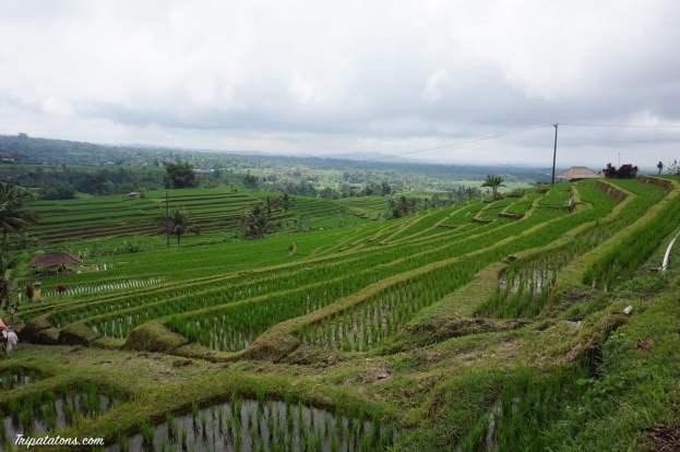 rice-terrace-jatiluwih-1