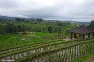 rice-terrace-jatiluwih-2