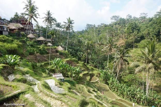 tegallalang-rice-terraces-1