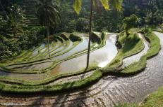 tegallalang-rice-terraces-6