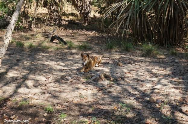 territory-wildlife-park-9