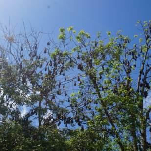dan-gleeson-memorial-gardens-2