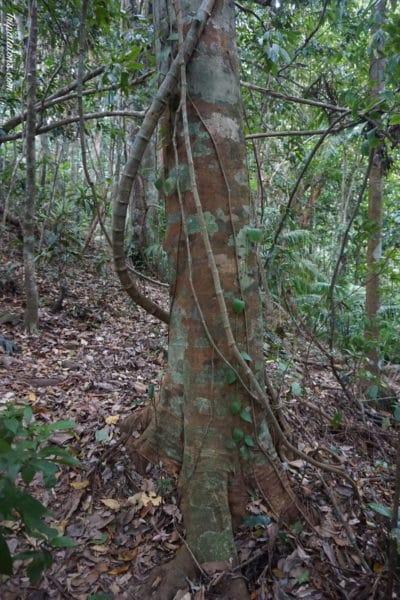 arbre militaire