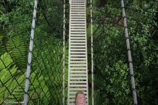 Montezuma Falls (3)