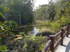esmerald-pool-jungle-6
