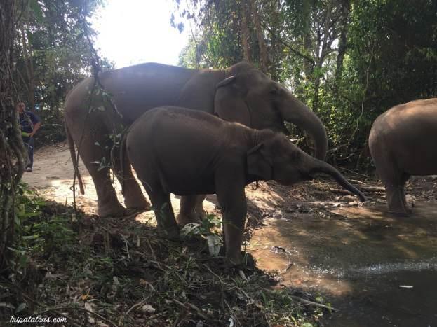 river-elephants-1
