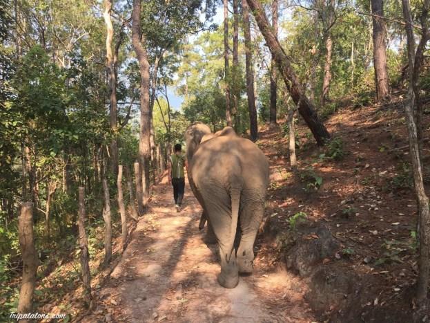 walk-elephants-1