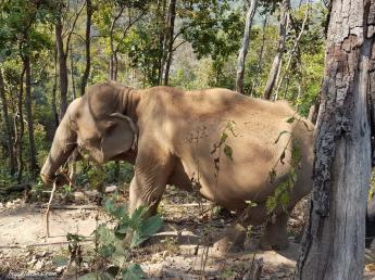 walk-elephants-5