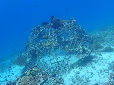 Turtle Capital of the World – Gili Islands Indonesia ...