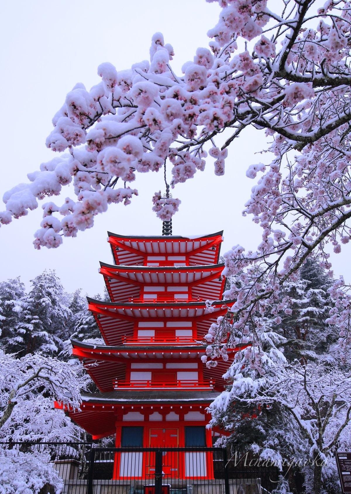 日本關東4月超反常落雪! 推特狂曬罕見「雪櫻奇景」如置身夢境 - TripGo 旅行趣