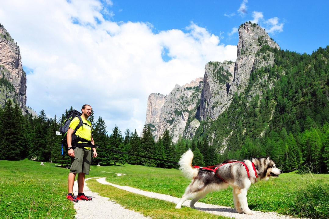 Dog trekking: in cosa consiste e come si pratica - Tripkly
