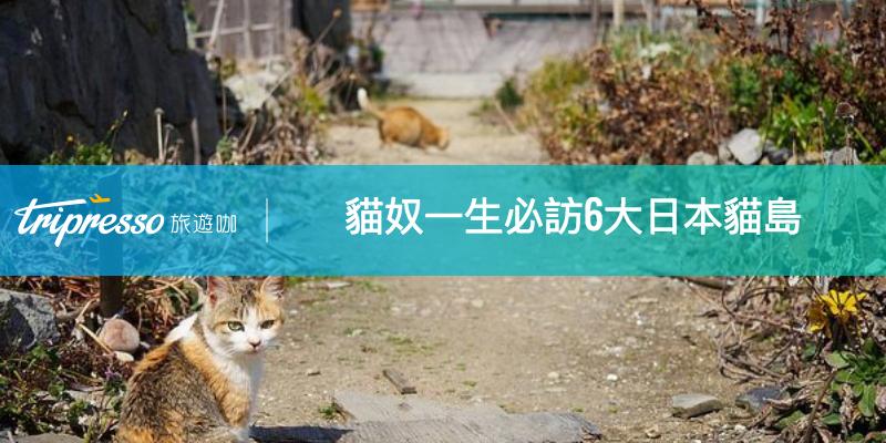 貓奴一生必訪!6大 日本貓島 旅遊地圖讓你輕鬆賞貓去