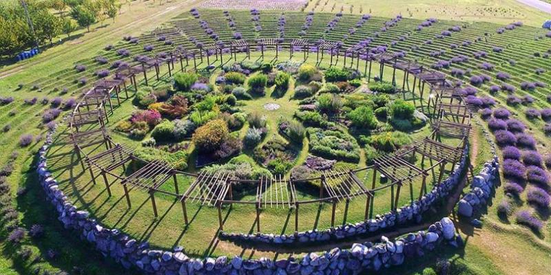 【全球薰衣草】不只北海道、普羅旺斯!還有這十個必訪的薰衣草花田
