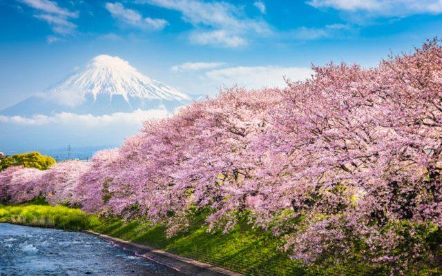 2020世界櫻花季最強懶人包|八大必去全球賞櫻景點都在這!