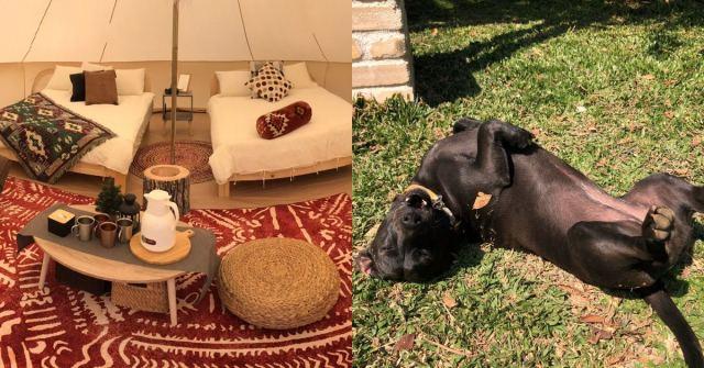 寵物友善露營區