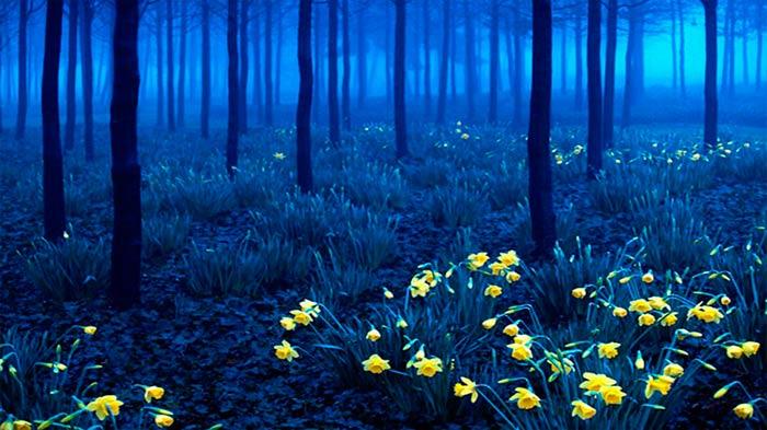 Black Forest, Southwest Germany