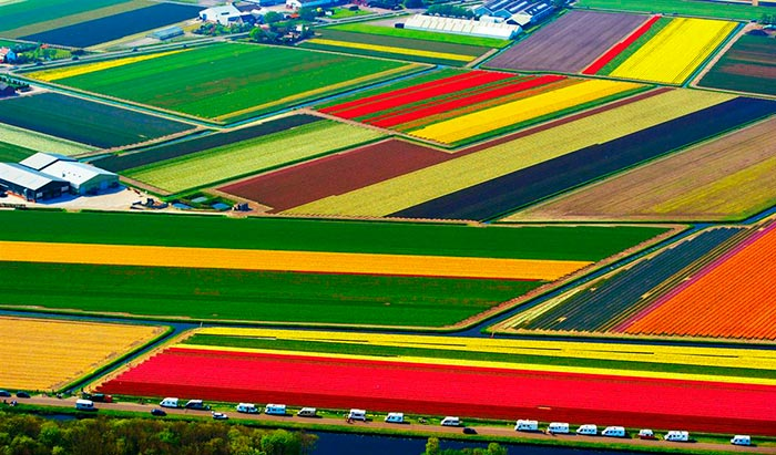 Tulip Fields in Lisse, The Netherlands