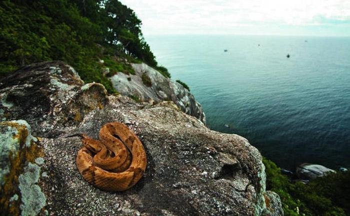 Ilha De Queimada Grande, Brazil