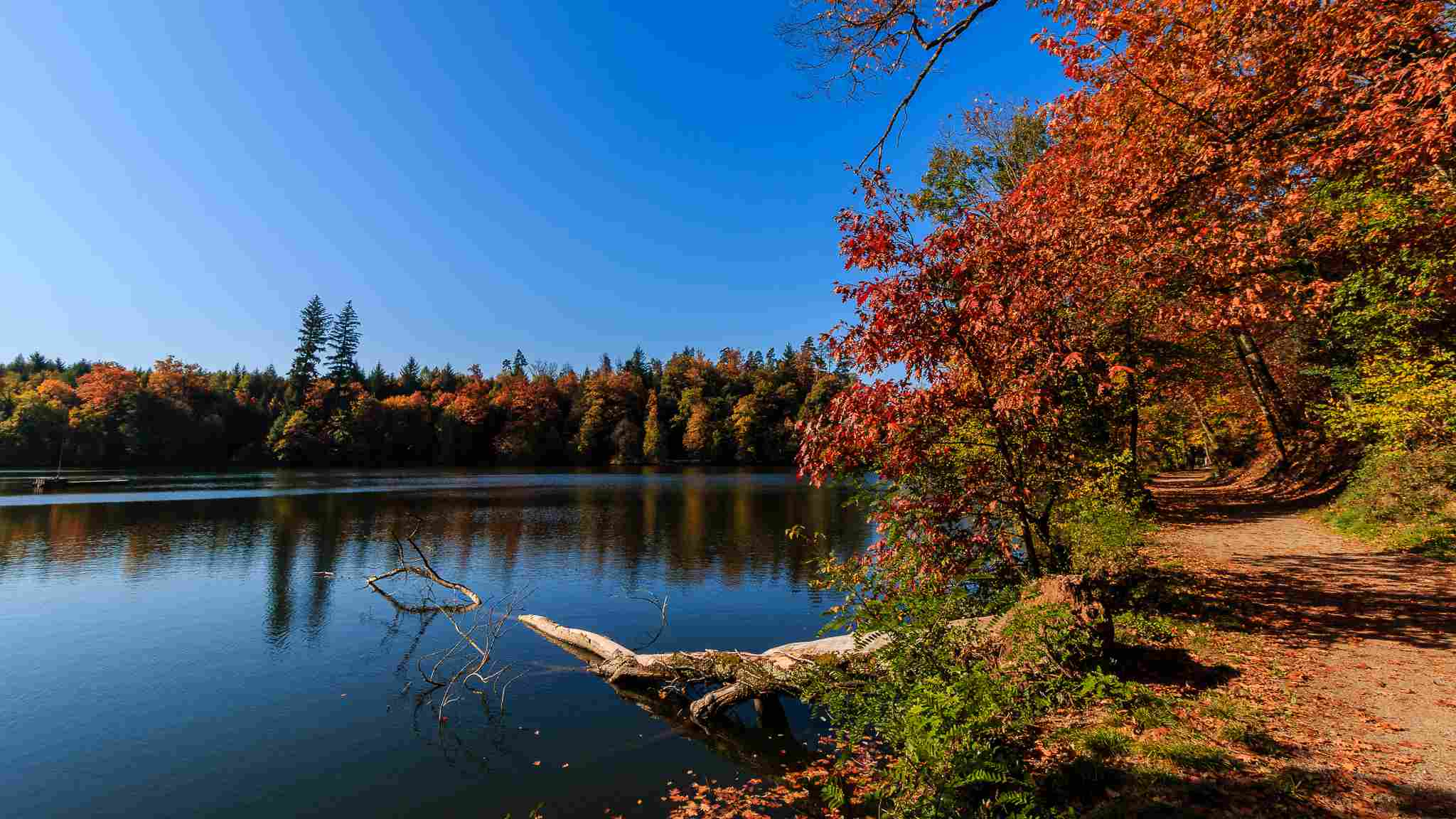 Fall Wooded Wallpaper Top 6 Places To See Autumn Leaves In Germany