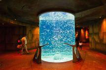 Guide Atlantis Palm Dubai