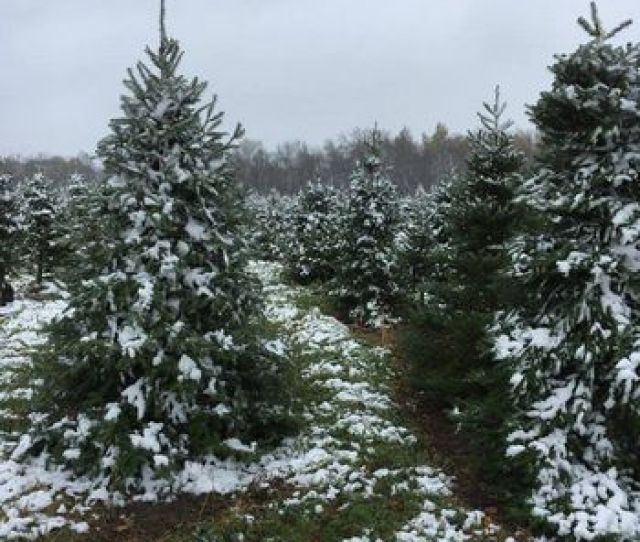 Covered Bridge Tree Farm