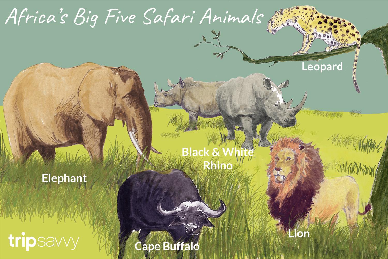 An Introduction To Africa S Big Five Safari Animals