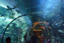 Diving With Sharks In Las Vegas Shark Reef Aquarium