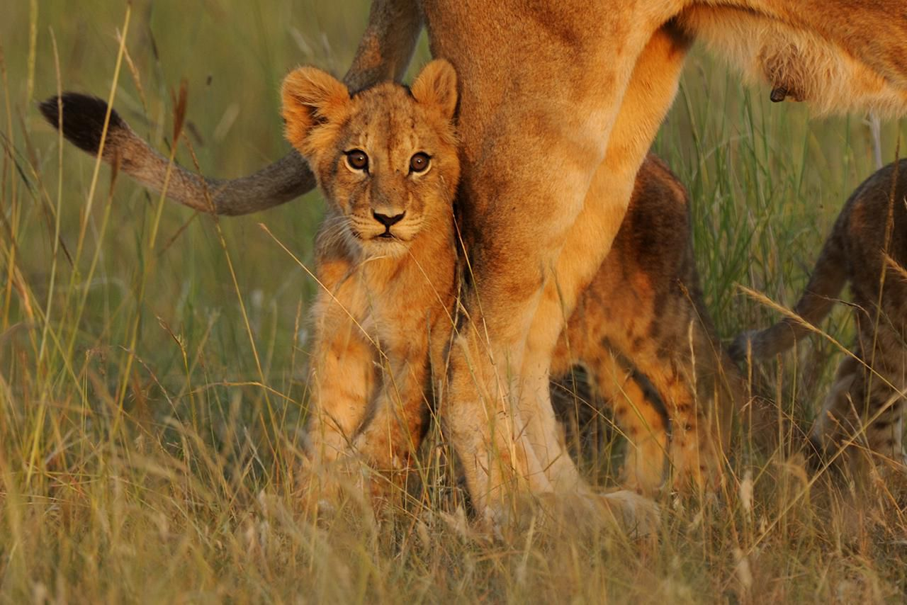 Fun Facts About Africa S Baby Safari Animals