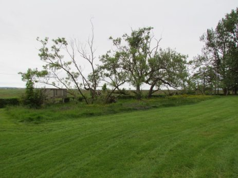Old French Willows of Grand-Pre