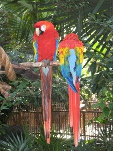 Parrots at Animal Kingdom