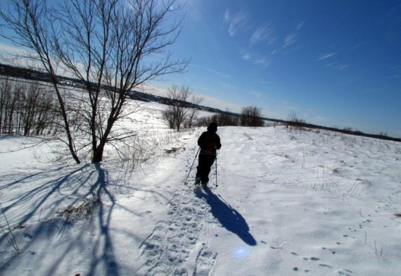 A perfect sunny day, ideal for a walk in the snow, watching birds and our friend the fox.
