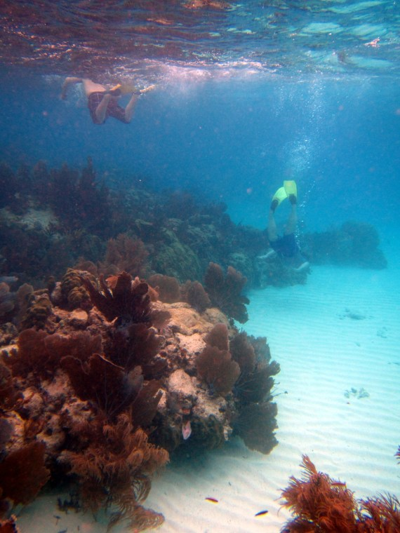 An amazing world below the surface in Florida!