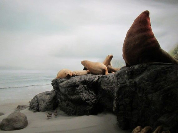 The real life size diorama of the seashore animals at The Royal BC Museum in Victoria, British Columbia.