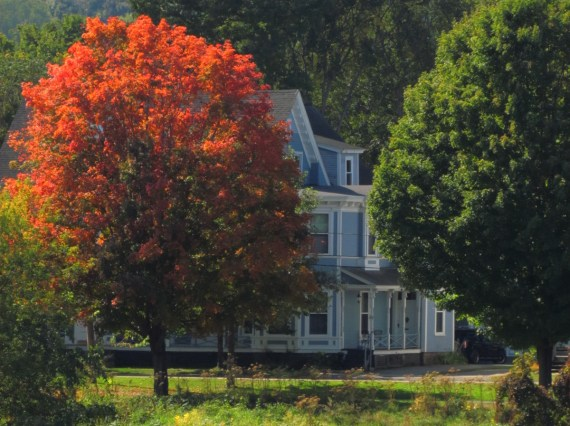 The autumn leaves were bright red on this sunny September afternoon in Fredericton.