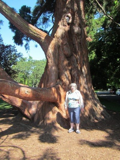 Mama D under the giant tree at Beacon Hill Park not far from the petting zoo.