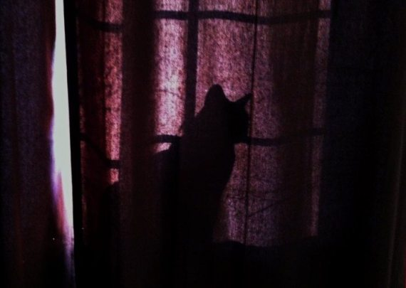 Jasper our sweet Burmese cat loved to perch in the window behind the curtain and bathe in the morning sun.
