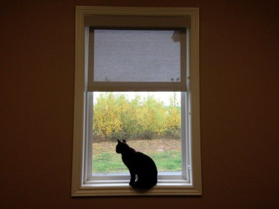 This picture is when we brought Jasper to the veterinarian in the early afternoon on the day after Thanksgiving. He was sitting on the window sill watching the fall movement outside. We didn't know that a few hours later he would be gone forever. We have very heavy hearts but are so blessed to have had him in our lives for a short time as he taught us so much about living in the moment and enjoying life.