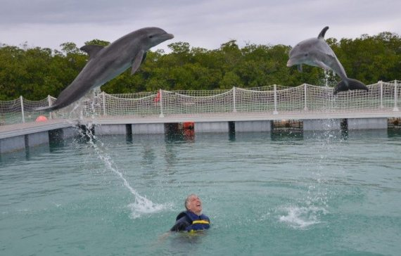 Being alone in the dolphin pen with the two dolphins leaping above me was just amazing!