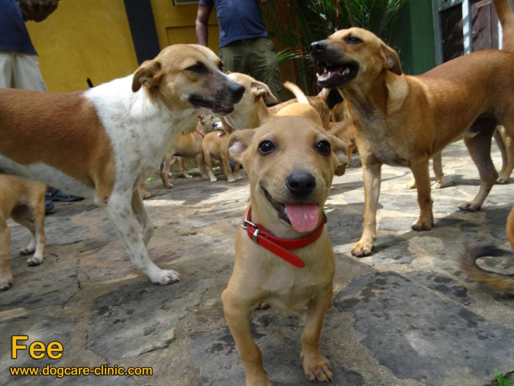 Dog Care Clinic – Fee and other dogs