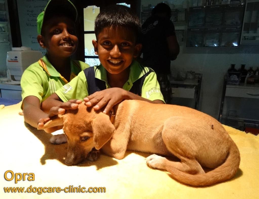 Dog Care Clinic - happy boys