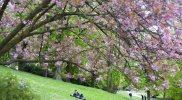 Pariisin kevät Buttes-Chaumontin puistossa. © Anuliina Savolainen