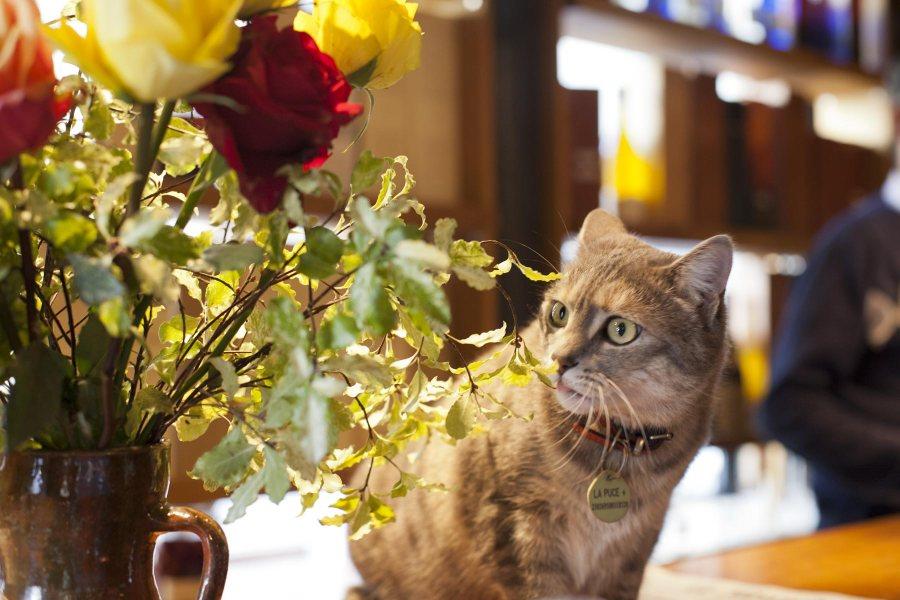 Polidor-ravintolan Puce-kissa. © tripsteri.fi / Anuliina Savolainen
