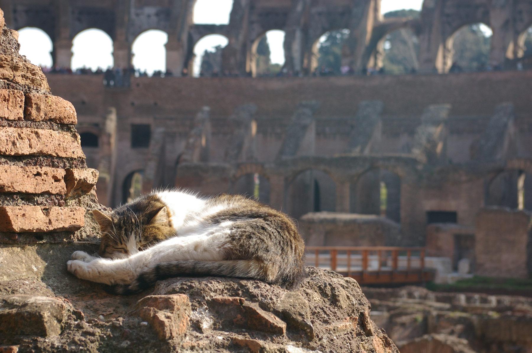 Kissa Colosseumilla © Deb Collins Flickr.com CC