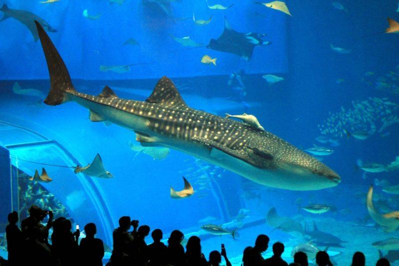 London Aquarium2 attractions in London